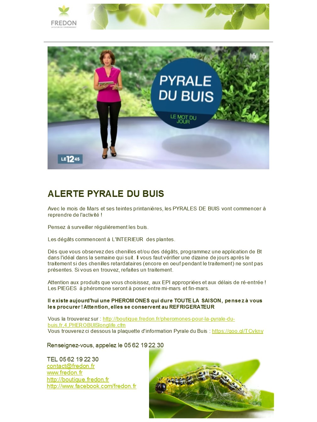 pyrale-du-buis